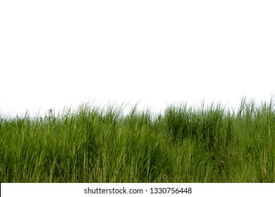 Green fresh grass naturally on isolated white background