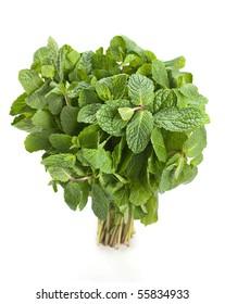 Green fresh herb spearmint bunch on white