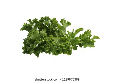 green fresh kale leaf isolated on white background