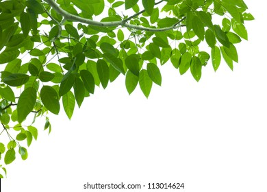 green fresh leaf frame on white background isolate