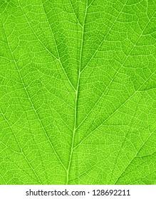 Green fresh leaf surface
