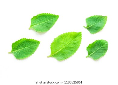 Green fresh mint leaves on a white background isolated. Fresh green organic leaves for healthy nutrition and for toning the body. View from above.