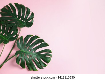 Green fresh monstera leaves on color background, flat lay with space for text. Tropical plant