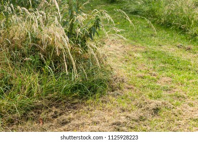 Green fresh mown grass covered by dry hay closeup