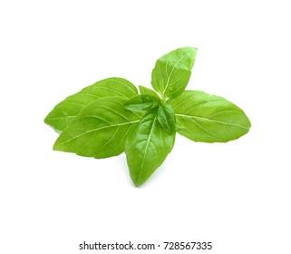 Green fresh organic basil, isolated on white