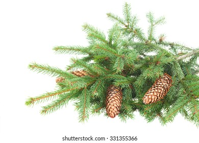 Green fresh pine branch with cones isolated over white background