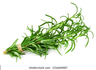 green fresh rosemary isolated on white background.