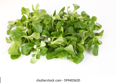 Green fresh salad with white background