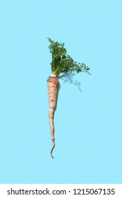 Green fresh stem of parsley with root on a blue background with copy space. Healthy vegetable. Top view