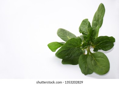 Green fresh vegetarian salad leaves on white background. Fresh spinach on a white background with copy space on the left. Healthy food and vegetarian concept. Zero waste life design.