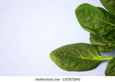 Green fresh vegetarian salad leaves on blue background. Fresh spinach on a blue background with copy space on the left. Healthy food and vegetarian concept. Zero waste life design.