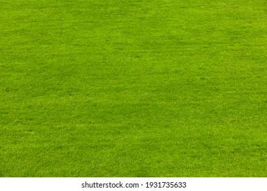 Green freshly mown lawn in summer