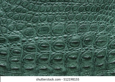 Green Freshwater crocodile bone skin texture background