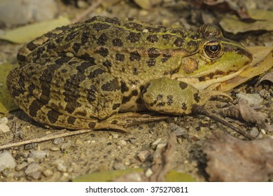 Green frog outdoors in autumn