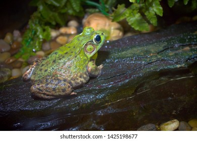 green frog rock wild environment nature wildlife