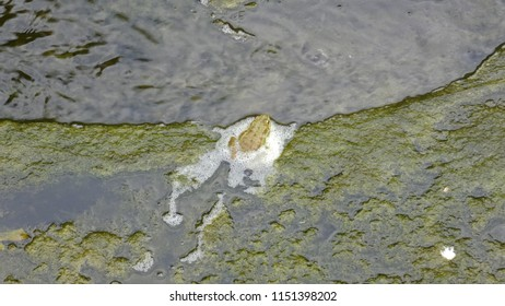 Green frog swimming from mud to clean water. Wild animal in real nature. Summer day.