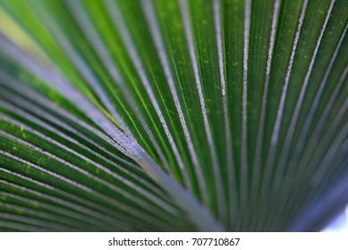Green fronds macro