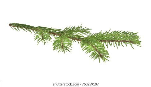 green fur-tree isolated on white background