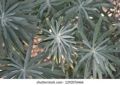 Green garden plant