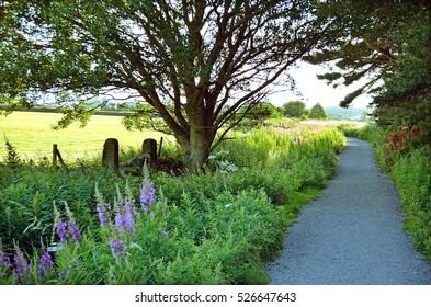 Green Garden, Tree Beside Pathway, Park, Nature Landscape