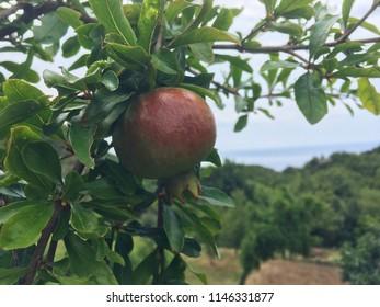 Green Garnet tree