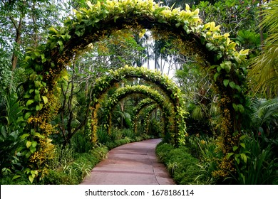 The green gate in orchid garden