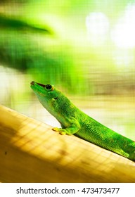 Green gecko on bamboo