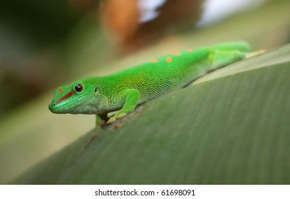 Green gecko on the roof (Zurich zoo)
