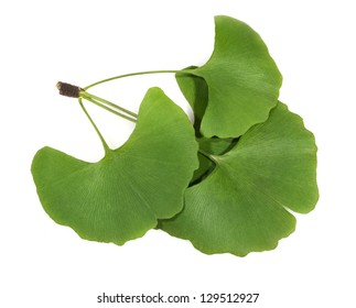 green ginkgo biloba leaves isolated on white background
