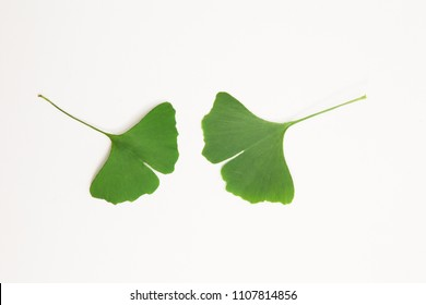 Green ginkgo biloba leaves on a white background