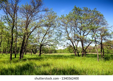 Green glade and spring trees in sunny day