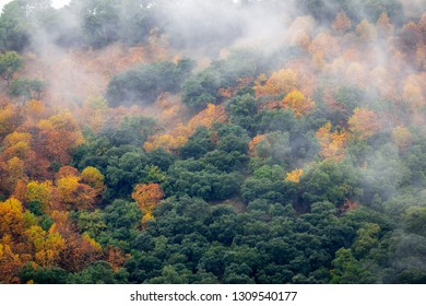 Green and golden trees of wild forest with flowing cloud of haze above