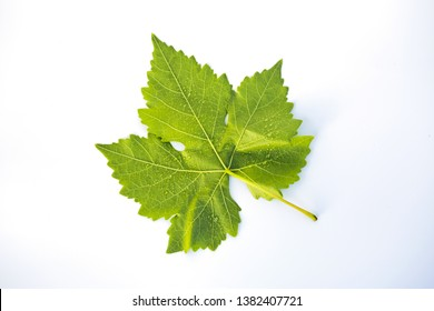 green grape leaf isolated on white background - Image