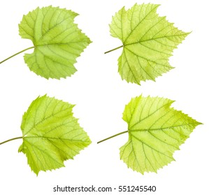 Green grape leaf. isolated on white background. Set