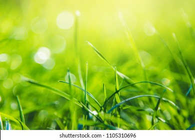 Green grass abstract background with copy space. Summer nature details
