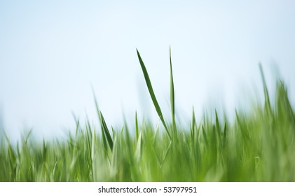 Green grass abstract background - soft focus. Shallow focus depth on two blades