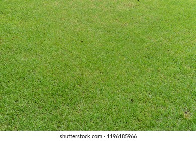 Green grass after rain