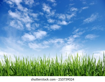 Green grass against the blue sky