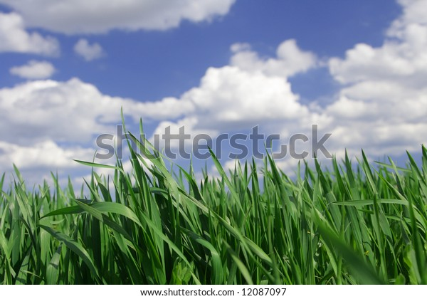 Green grass against the solar sky