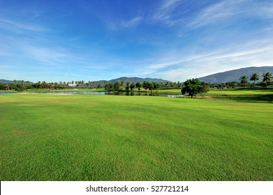 Green grass area in golf courses in bright day.