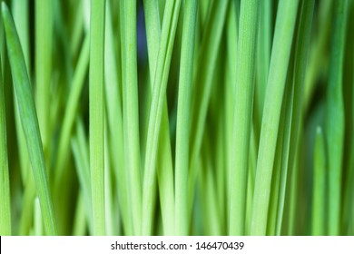 Green grass, background.