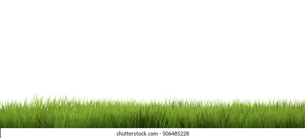 green grass. green grass background
