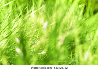 Green grass background. Blurred background.