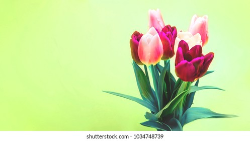 Green grass  background and bouquet of red purple and white  tulips. Conception holiday, March 8, Mother's Day. selective focus. vintage filtered , copy space isolated  decoration