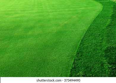 green grass background in golf course