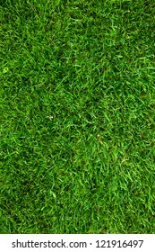 green grass background (natural background)