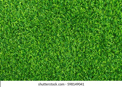 Green grass background texture.  Green lawn  texture background.  top view.