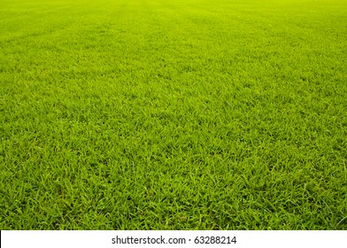 Green grass background  texture straight