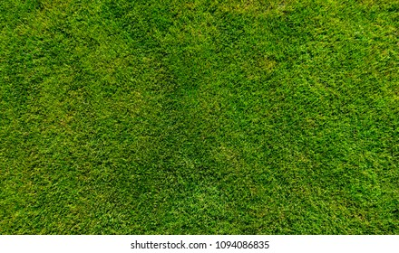 Green grass background texture top view