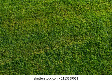 Green grass background texture top view